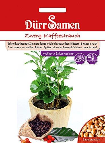 Dürr Samen 4377 Zwerg-Kaffeestrauch (Kaffees...