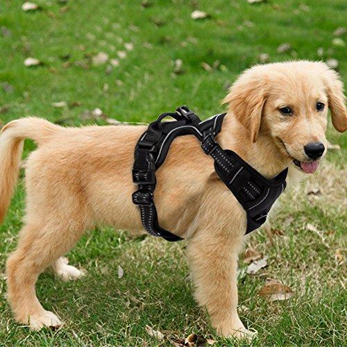 FullBerg® Hundegeschirr für Kleine, mittelg...