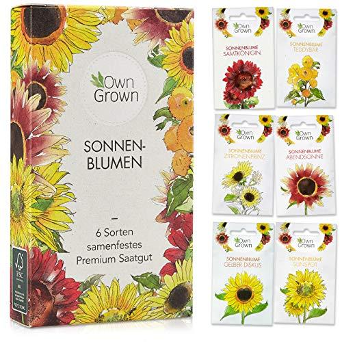 Sonnenblumen Samen Set: Premium Sonnenblumen ...